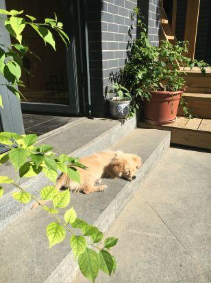 房间温馨小院大赞!核桃树和院内花花草草充满京味!