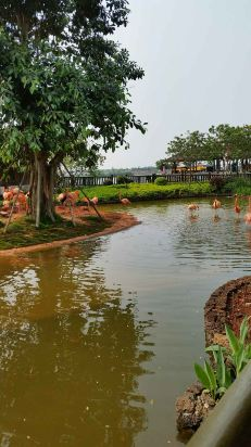 酒店环境很好,房间舒适,周边的红树林公园很赞!强烈推荐!