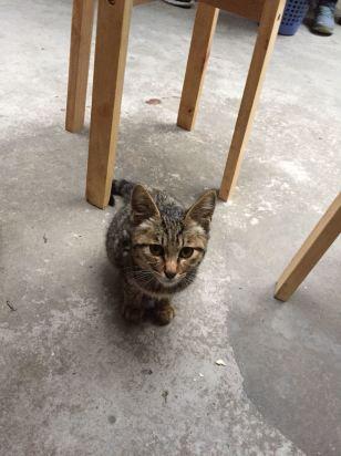 绿植园艺动物猫