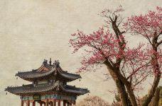 南京-C_image