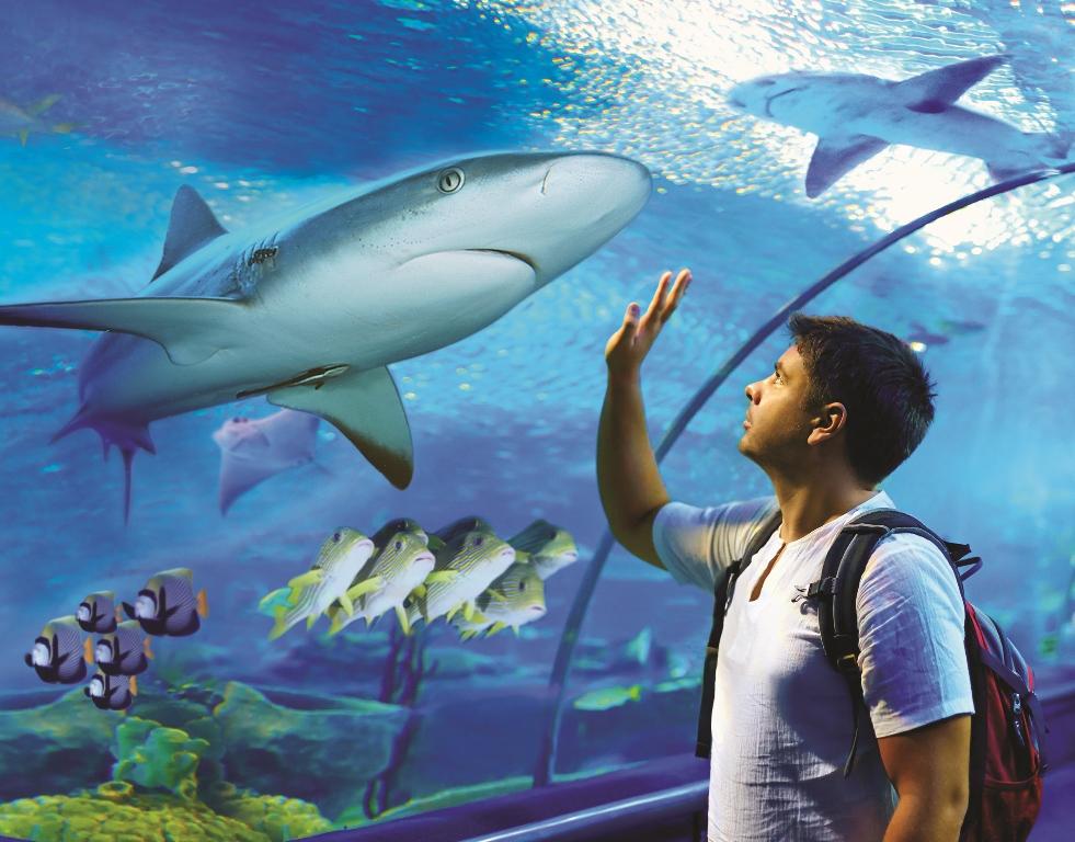 凱恩斯水族館門票